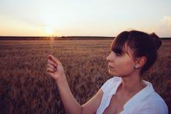 Looking at Barley Plant Stock Photography