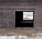 Looking through the barn doors Stock Photos