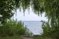 Looking beyond the trees. Shot in Oakville Ontario a secluded view of the water Royalty Free Stock Images