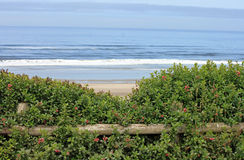 Looking Beyond a Wooden Fence to the Ocean Stock Image
