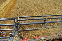 Looking blades reap from the cockpit combine. Harvested wheat a summer day stock photos