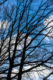 Looking in the blue cloudy sky with bare branches in foreground Stock Photography