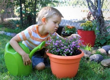 Looking for Bugs. Little boy looking for bugs on a plant after watering Royalty Free Stock Photography