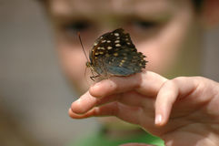 Looking at butterfly Stock Images