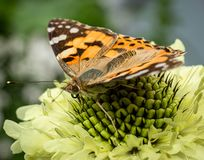Eye to eye with a butterfly stock photo