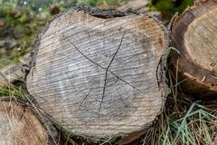 A Cut Tree Trunk. Looking at the cross section of a cut tree trunk stock photo