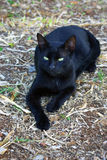 Looking dangerous. Cute little black cat, looking fairly dangerous taking this pose and with her eyes like black panther's Stock Photos