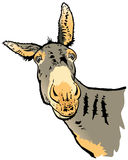 Looking Donkey Royalty Free Stock Photos
