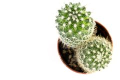 Looking down from above onto a round cactus with prickly thorns royalty free stock photos