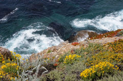Looking down at the California Coastline with wild flowers and white water waves Stock Photo
