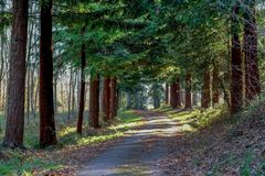 Tree lined autumn country lane Stock Photos