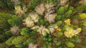 Looking down on forest of breathtaking Autumn colors, Fall splendor, aerial flyover. Aerial view. 4k stock footage