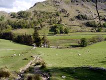 Looking down gentle slope into Grisedale, Lake District Stock Photos