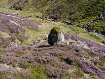 Looking down heather strewn bank to gulley below Stock Image