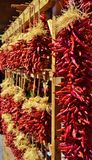 LOOKING DOWN ISLE OF DISPLAYED HANGING CHILI PEPPERS Royalty Free Stock Image