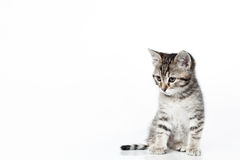 Looking down kitten royalty free stock image