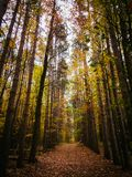 Looking Down a Lane of Trees in Michigan During Autumn royalty free stock photo