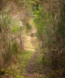 Looking down a long and winding path Stock Photography