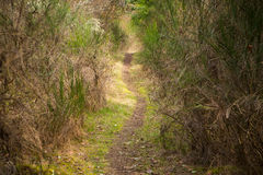 Looking down a long and winding path Royalty Free Stock Photos
