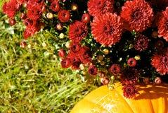 Looking Down At Mums And Pumpkin Royalty Free Stock Photos