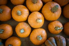 Harvest Orange Pumpkins stock photos