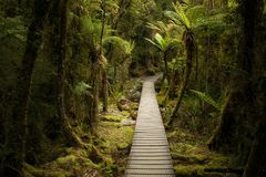 Looking down the path in the forest. Lake Matheson, South Westland, New Zealand Stock Image