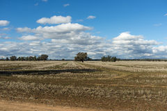 Rows of stubble after harvest Royalty Free Stock Photo