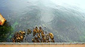 Looking down shoreline boardwalk stock footage