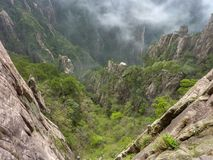 Looking down to a forest of pines in Huangshan Mountain. royalty free stock photography