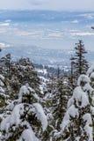 Looking down to Okanagan Lake and West Kelowna after snowfall. Vertical shot looking down through conifer trees, to Okanagan Lake and the city of West Kelowna Royalty Free Stock Image