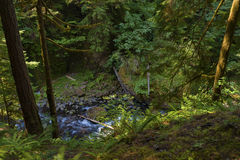 Looking down from trail at Tanner Creek in the Columbia River Gorge. Hiking along trail to Wahclella Falls in the Columbia River Gorge, can look down into Tanner Stock Images