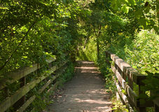 Looking down a wooden path in the woods in the summer Stock Images