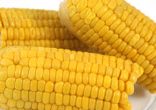 Looking down on Yellow corn co Royalty Free Stock Images