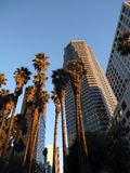 Looking at Downtown LA Buildings and Palm trees Stock Image