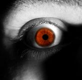 Looking eye. On grayscale photo_colored eye Royalty Free Stock Photos