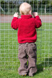 Looking through the fence Royalty Free Stock Images