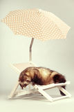 Looking ferret portrait on beach chair in studio. Ferret portrait on beach chair in studio Stock Photo