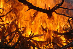 Looking into a fire. A small slash pile on fire Stock Image