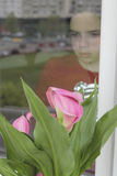 Looking at a flower from behind the window Royalty Free Stock Image