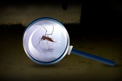 Focus lens mosquito Stock Photography