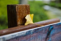 Free Looking For The Fairy Tale Of Autumn, Lost In The Ginkgo Hometown Of The Sea Township, Beautiful Ginkgo Tree Leaves In The Temple Royalty Free Stock Photo - 177078015