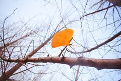 Free Looking For The Fairy Tale Of Autumn, Lost In The Ginkgo Hometown Of The Sea Township, Beautiful Ginkgo Tree Leaves In The Temple Royalty Free Stock Image - 177078066