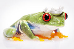 Looking Froggy Stock Image