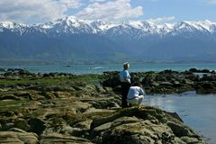 Looking for fur seals on the rocky shore, Kaikoura, New Zealand royalty free stock image