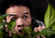 Looking through Jungle. An asian man is suprised and scared  as he looks through a jungle plant Stock Images
