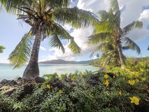 Looking through lush foliage, tropical flowers and coconut palm. Trees to the South Pacific Ocean on Upolu Island, Western Samoa Stock Image