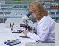 Looking through a microscope Stock Photography