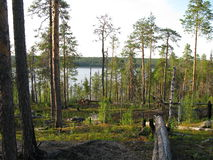 Looking nature of Karelia Royalty Free Stock Photography