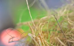 Looking for a needle in a haystack. On field Royalty Free Stock Image