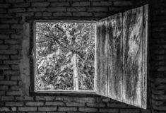 Looking through an old window stock photography